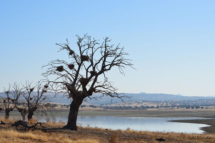 nidos-de-cormoran